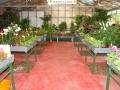 venta-plantas-interior-barcelona-palleja
