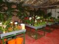 venta-plantas-interior-barcelona