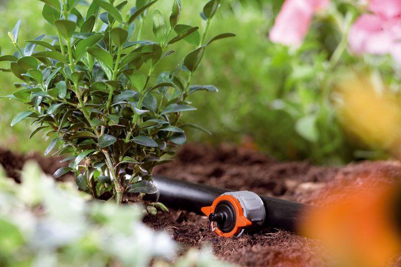 Tareas del jardín en Agosto