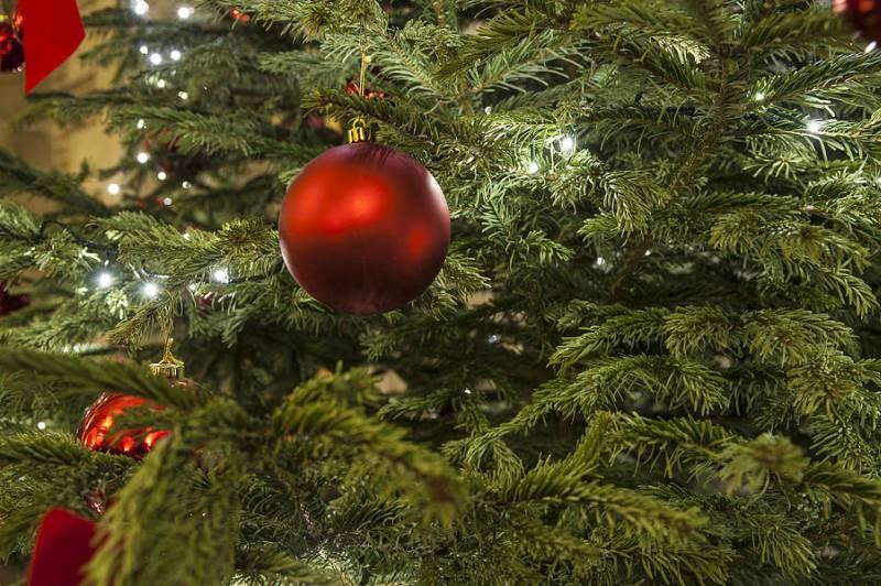 arbol-de-navidad-jardin-decoracion