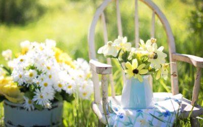 Tareas del jardín en junio