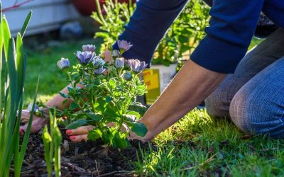 Tareas del jardín en octubre