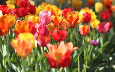 Tareas del jardín en mayo