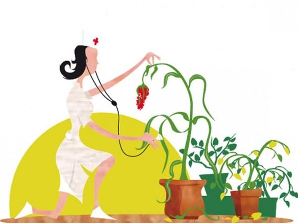 Recuperar las plantas de interior tras el verano