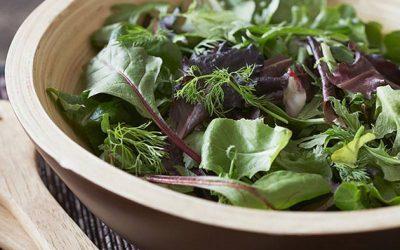 Brotes verdes para ensalada todo el año