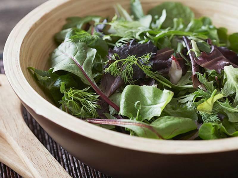 cultivo de brotes para ensalada