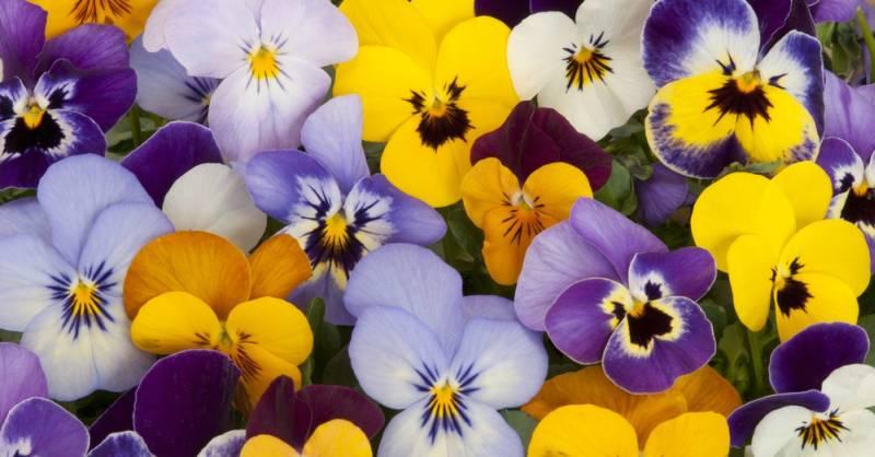 Flores comestibles: del jardín al plato