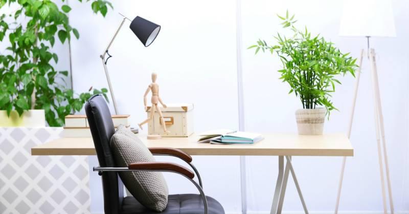 8 plantas resistentes para tu oficina