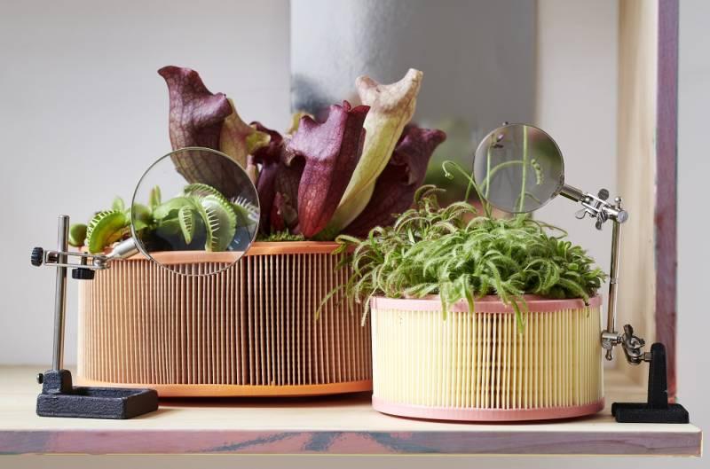 Decora con plantas carnivoras
