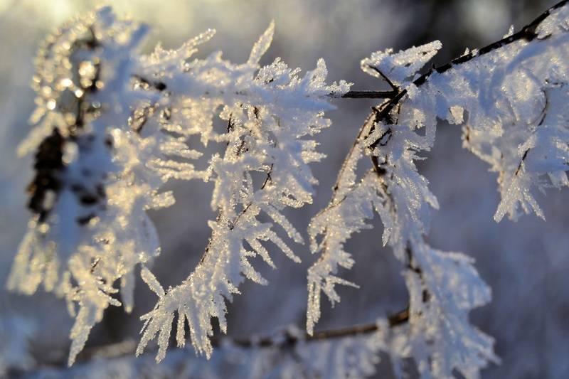 nieve-ramas-arbol