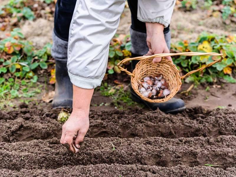 tareas-jardin-huerto-enero