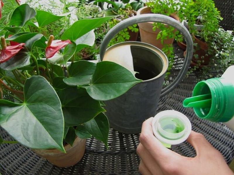 Rutina Verde: Cuida las hojas de las plantas de interior