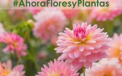 #AhoraFloresyPlantas