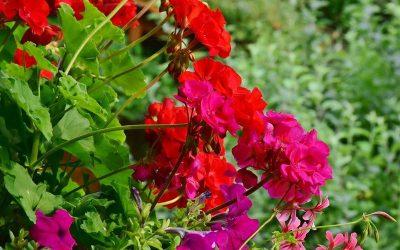 Rutina Verde: Obtén plantas a partir de esquejes