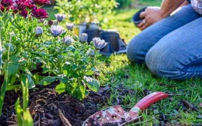 Rutina Verde: Arranca ya las plantas de temporada de invierno