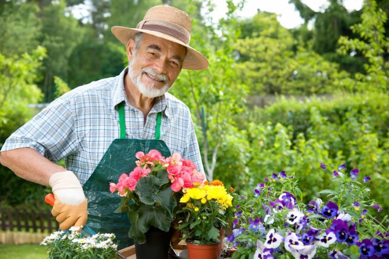 Cultiva y planta
