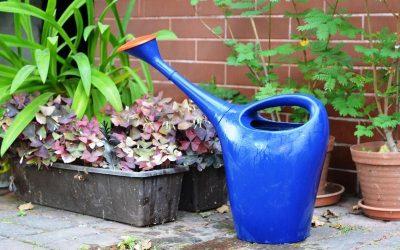 Cómo y cuando regar tus plantas