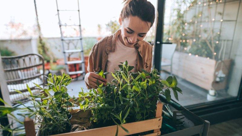 Plantas contra el estrés