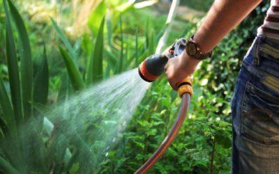 Protege tus plantas y jardín de las olas de calor